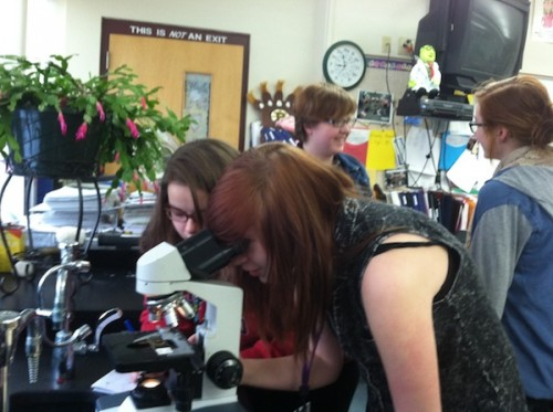 Ashley is looking at bacteria under the microscope while Liza, Stephanie and Samantha are discussing analysis ideas.